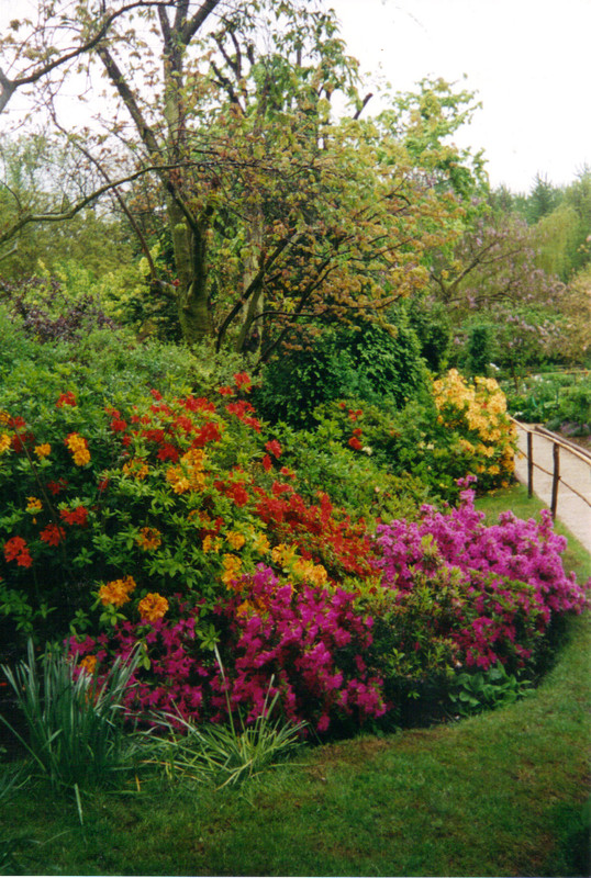 Giverny 3